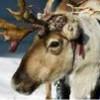 Viaggio a Rovaniemi, il villaggio di Babbo Natale