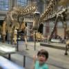 Berlino con bambini, quinto giorno: Museo Scienze Naturali, Memoriale del Muro, Legoland