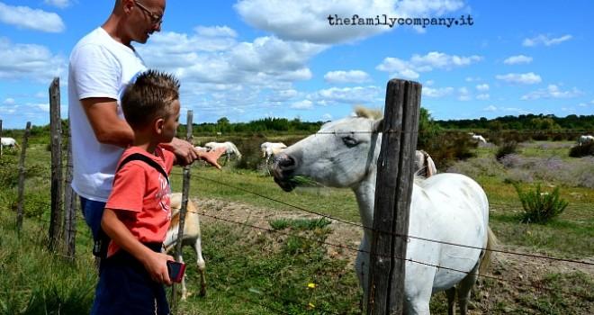 I colori della Camargue: itinerario con bambini