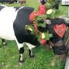 La Desmontegada: l'antico rito della transumanza delle mucche