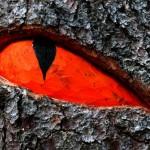 A caccia di draghi nella foresta di Latemar