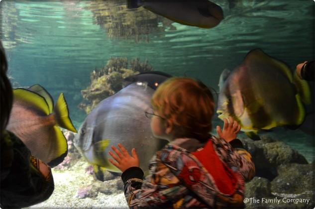 acquario genova con bambini
