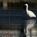 Lezioni di fotografia 2: l'inquadratura e la regola dei terzi