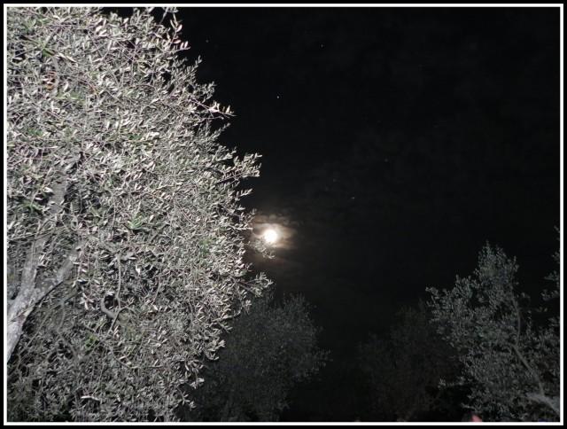 La luna tra gli ulivi.Credits: Kiala Camper