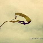Weekend sulle ali del vento