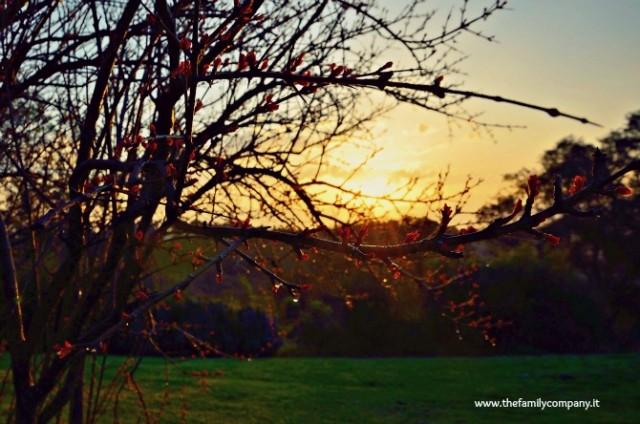 alba toscana arbusto resized