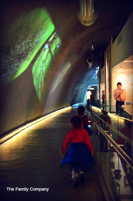 Natural History Museum Londra reparto darwin