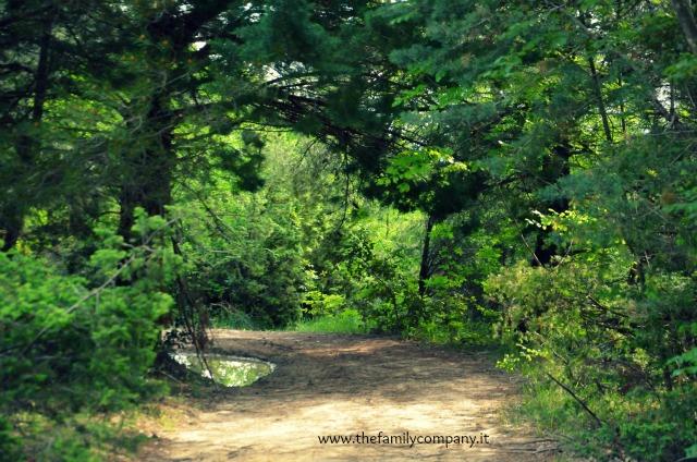 San settimio bosco