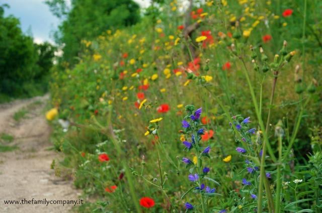 San settimio sentiero con fiori