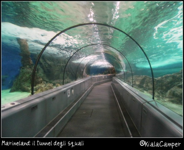 Marineland tunnel squali