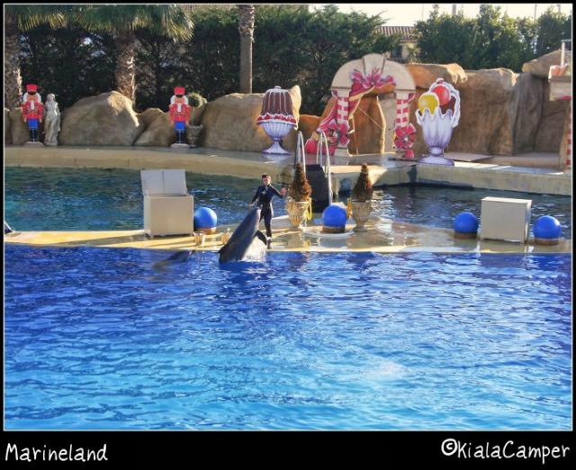 mariland delfini 2