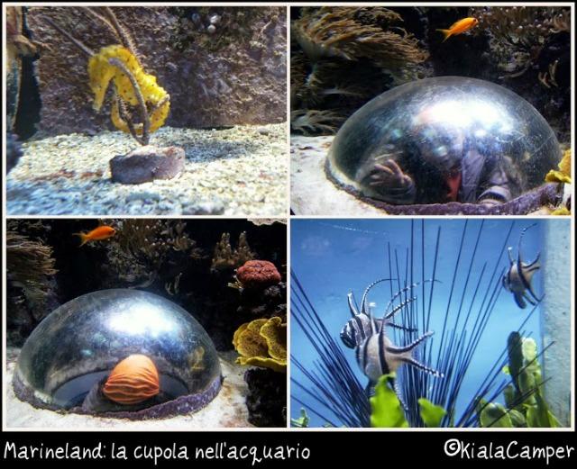 marineland cupola acquario