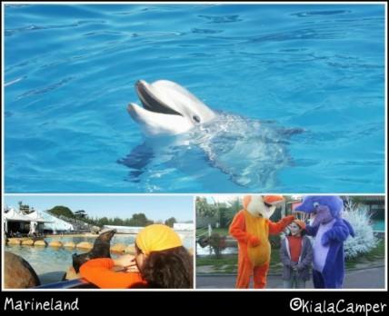 marineland delfini