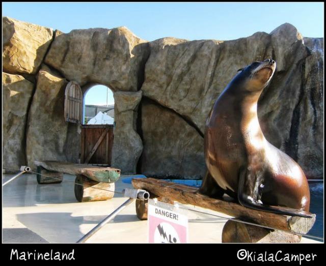 marineland foca