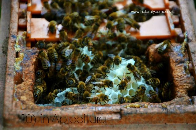 apicoltura titolo