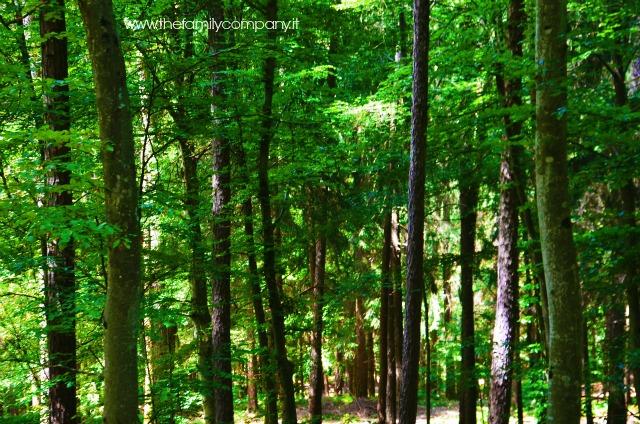 bosco parco faunistico