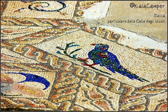 casa uccelli italica