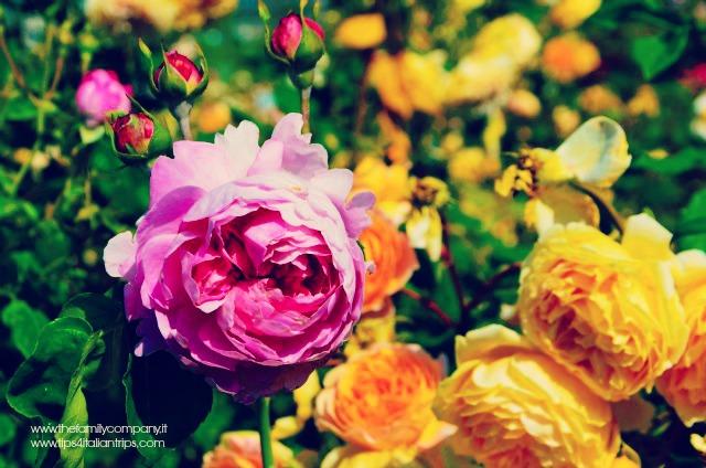 giardino della rosa di ronzone 3