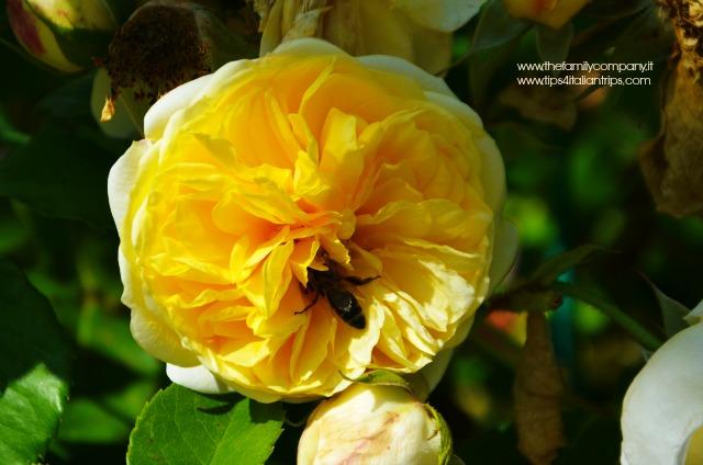 giardino della rosa di ronzone 5