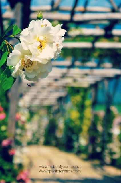 giardino della rosa ronzone 1