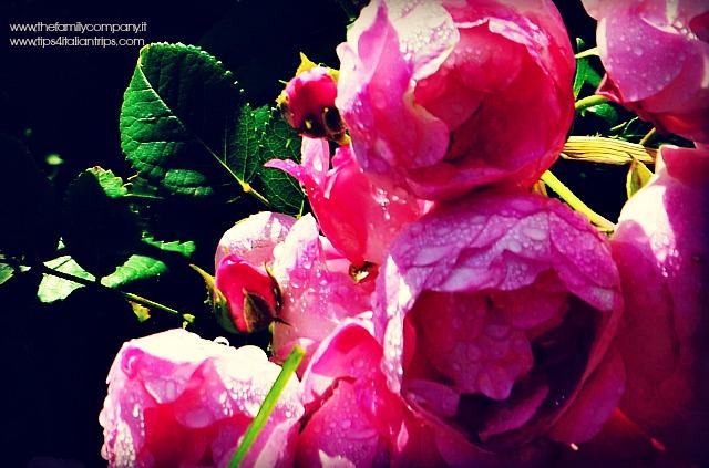 giardino della rosa ronzone 2