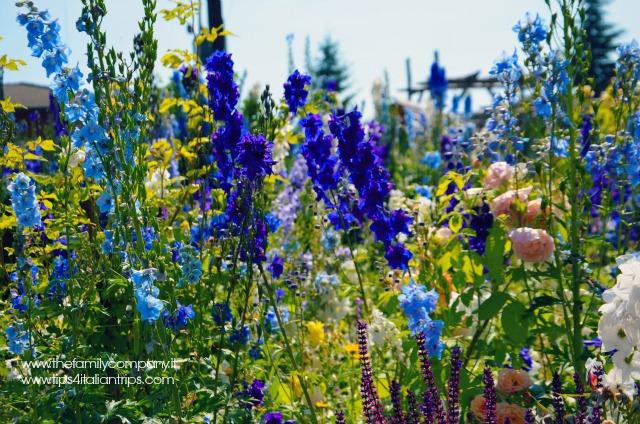 giardino della rosa ronzone 6