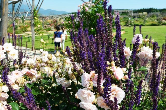 giardino rosa ronzone 7