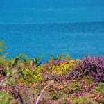 Cap Frehal view, Brittany, Bretagne, France, Bretagna, Francia