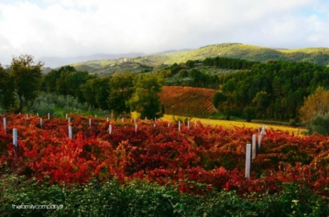 autunno in umbria: frantoi aperti