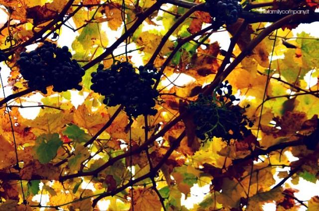 giardini di sissi castello di Castello Trauttmansdorff merano fall foliage