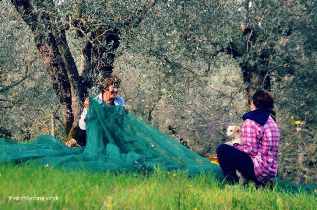weekend in umbria: la raccolta delle olive