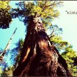 USA con bambini: il Sequoia National Park