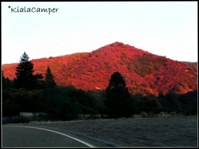 Panorami e colori tra le tortuose strade della Sequoia Forest