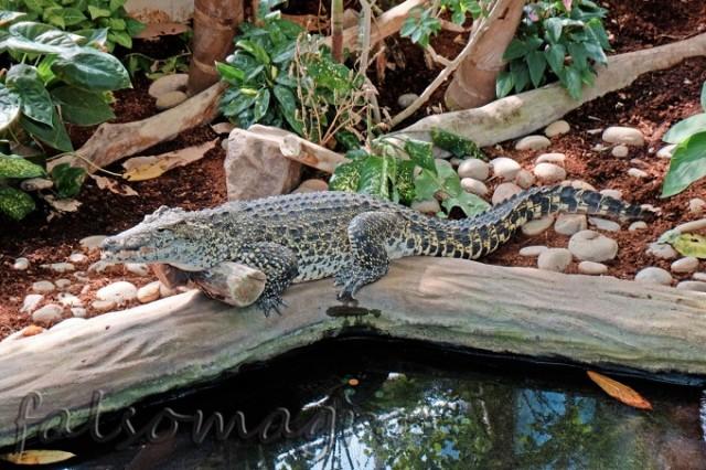 Paignton zoo: l'ambiente acquatico