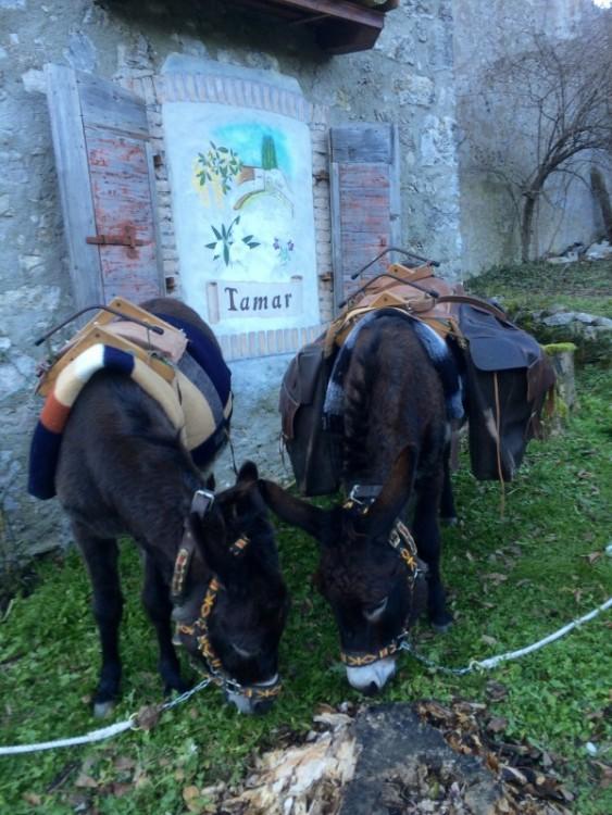 Le asinelle della Compagnia degli Asinelli a Borgo Tamar, Val Tramontina