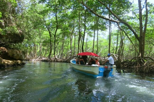 mangrovie  nel Parco Nazionale di Los Haitises