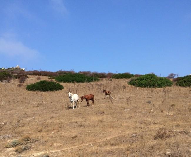 isola asinara escursioni con bambini