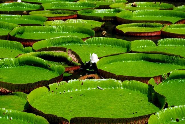 mauritius giardini botanici, mauritius con bambini