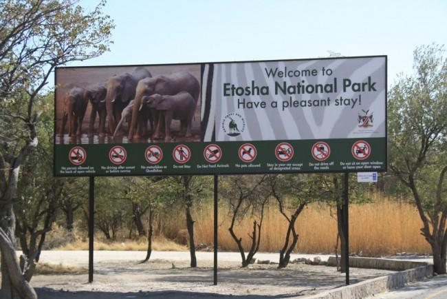 safari con bambini namibia, Etosha