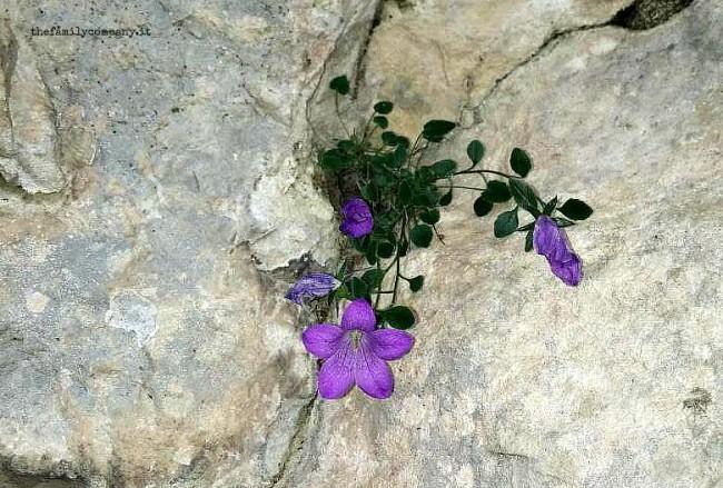 rifugio velo fiore