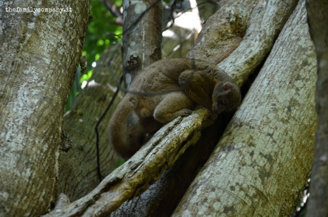 riserva lokobe lemure 2