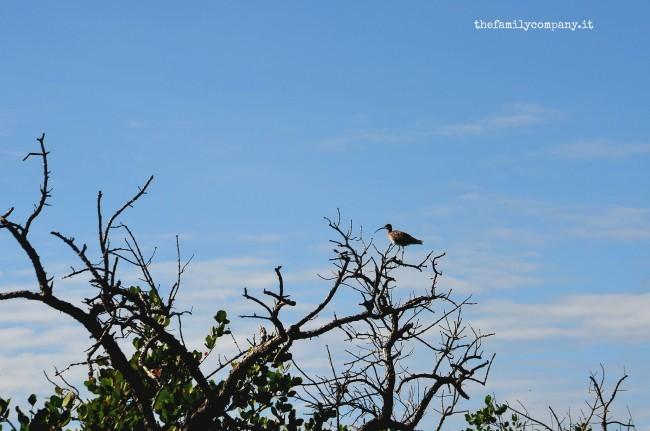 riserva di lokobe mangrovie