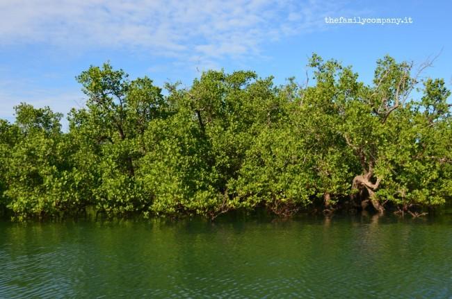 riserva lokobe mangrovie