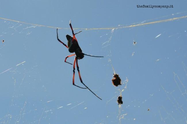 riserva lokobe ragno
