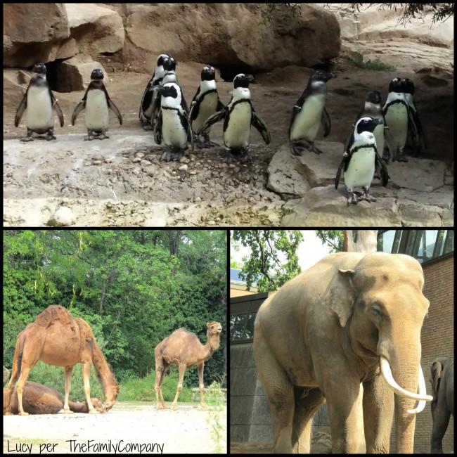viaggio con bambini zoo