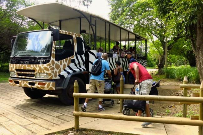 Tutti a bordo per il safari al Casela Park. Foto Roberto Savioli