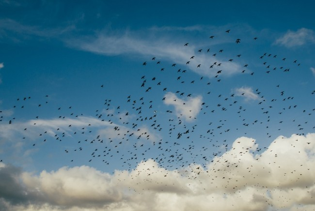 cielo nuvole uccelli