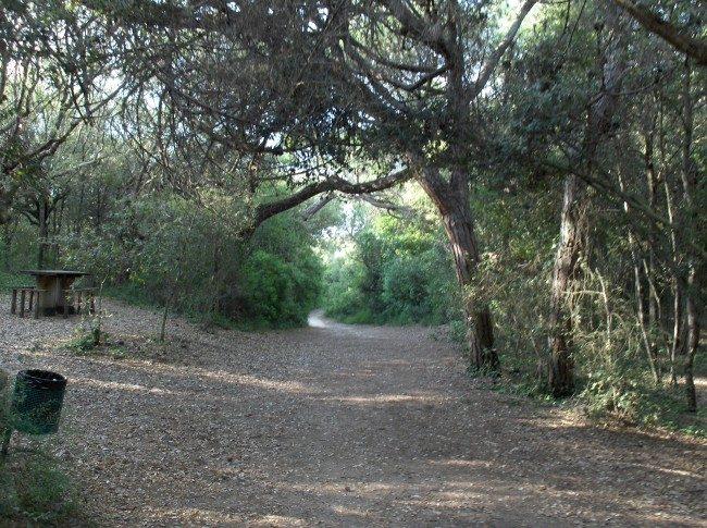 Parco di Rimigliano - S.Vincenzo