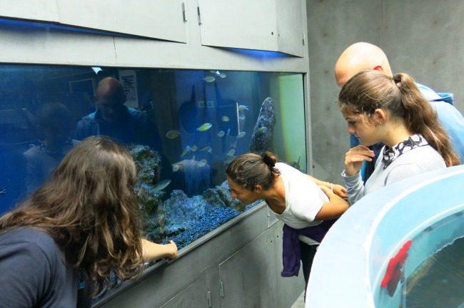 Visita all'Acquario di Porto Pim