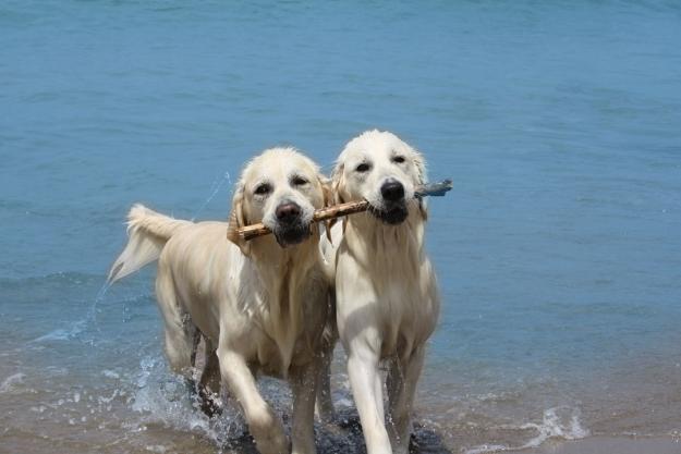 san vincenzo con bambini, spiaggia per cani